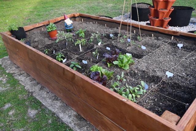 Vegetable Garden Progress Week 9